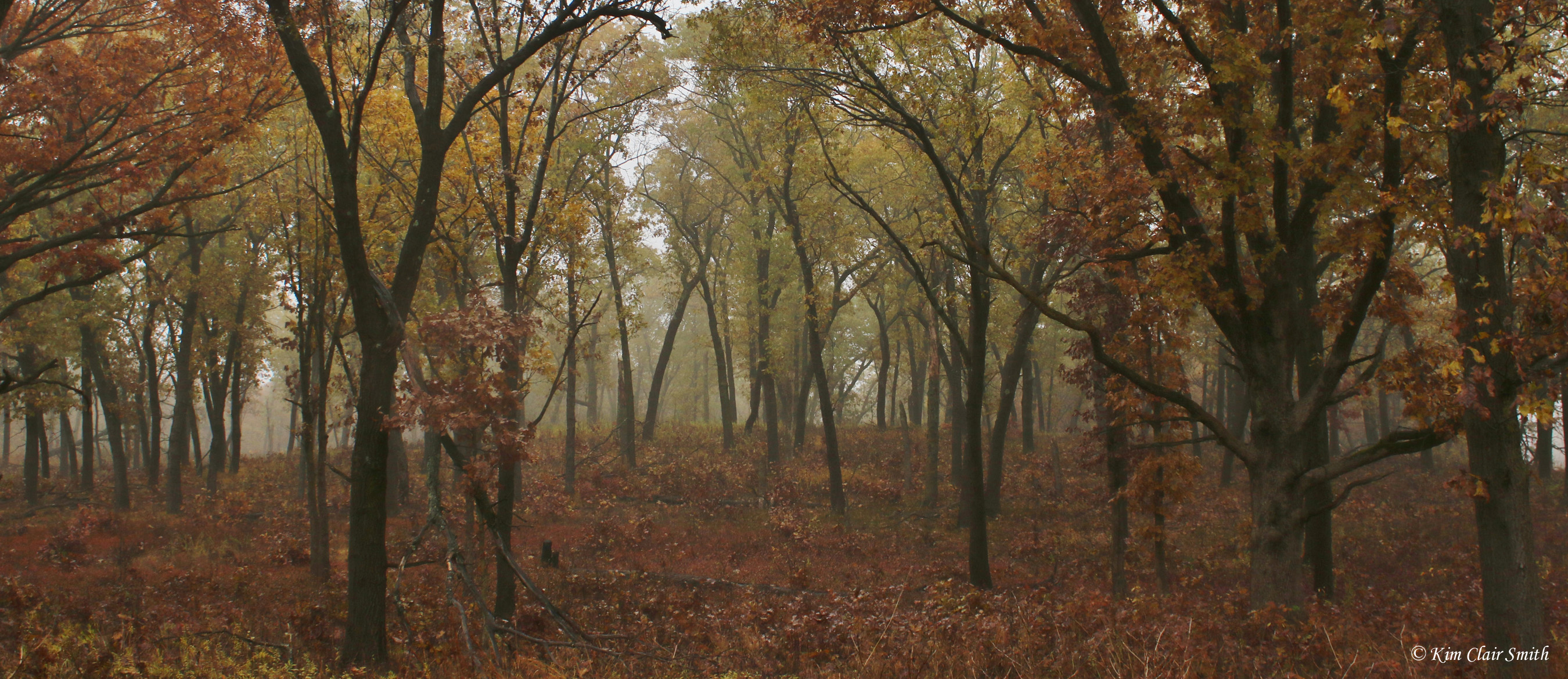 Woods with color and fog resized w sig