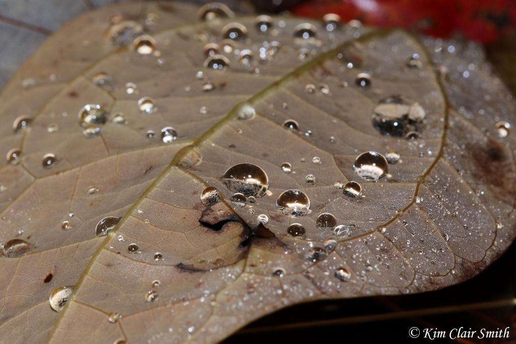 water drops on leaf v2 reduced w sig.jpg