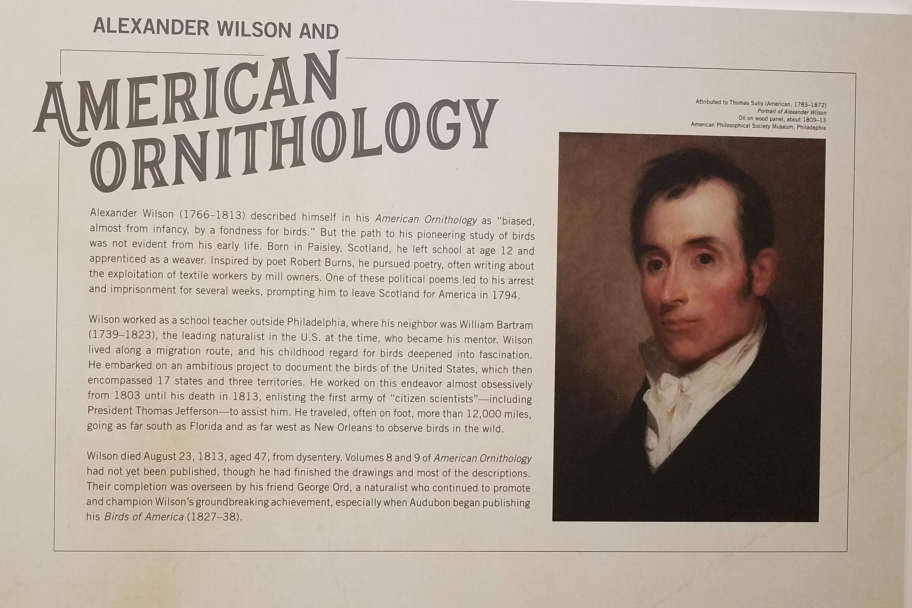 Before Audubon - Alexander Wilson exhibit at TMA - about Wilson