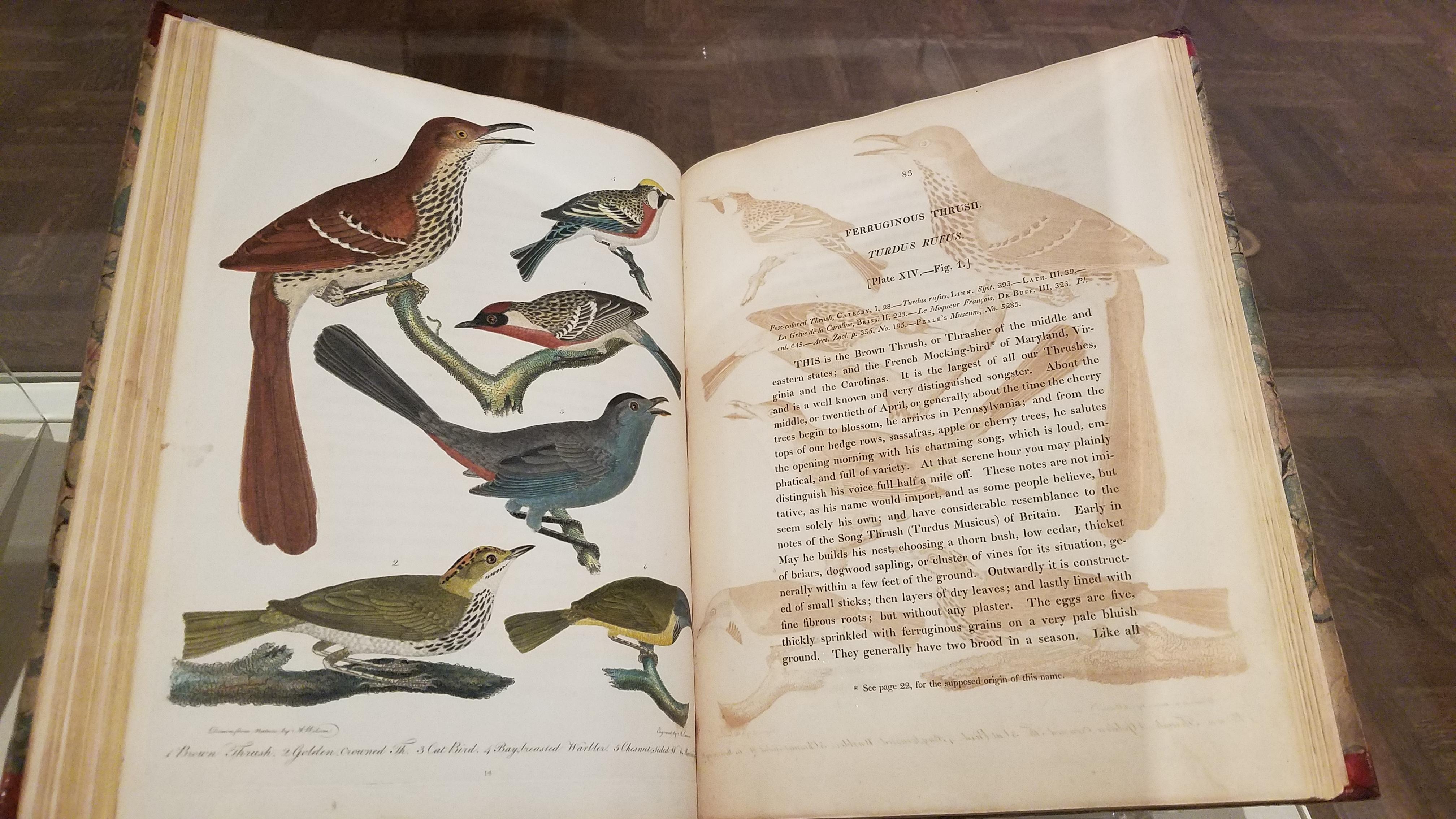 Before Audubon - Alexander Wilson exhibit - Brown Thrasher Volume 2