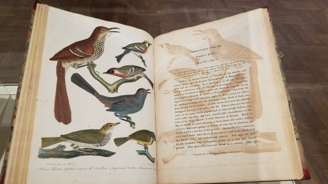 Before Audubon - Alexander Wilson exhibit - Brown Thrasher Volume 2