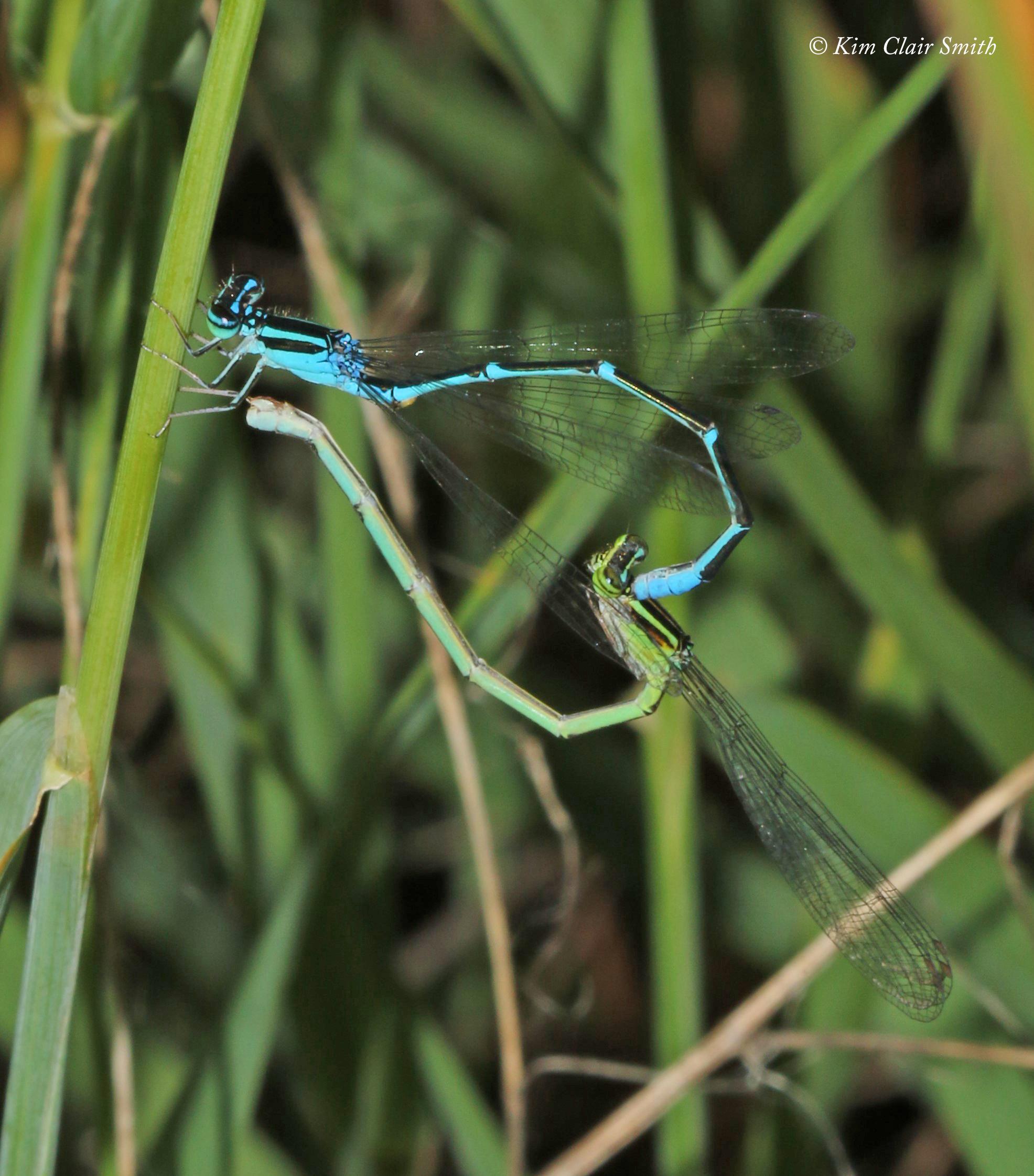 Stream bluet pair in tandem - step 2 - w sig