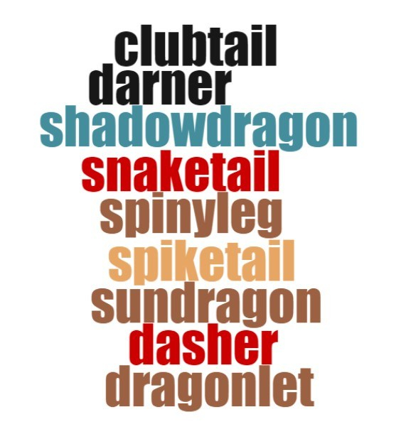 Dragonfly names word cloud