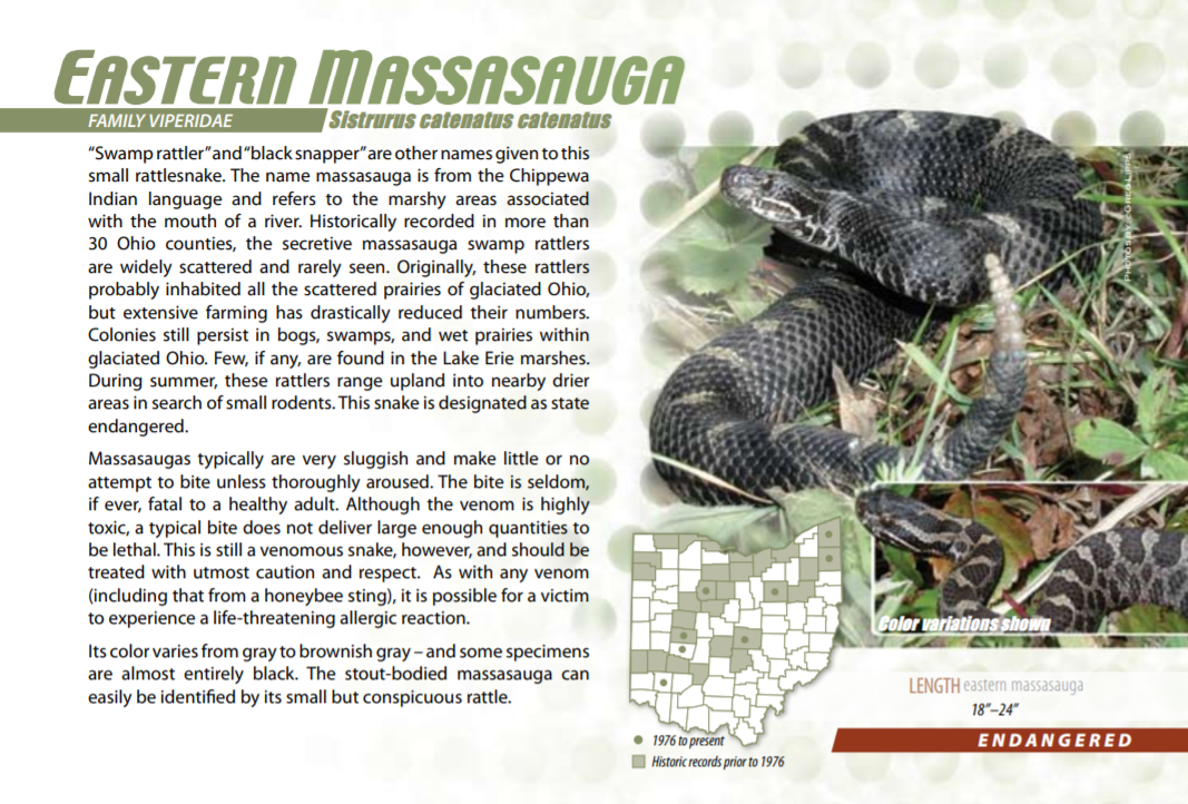 Eastern Massasauga rattlesnake Ohio