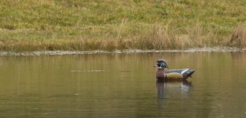 Wood duck decoy