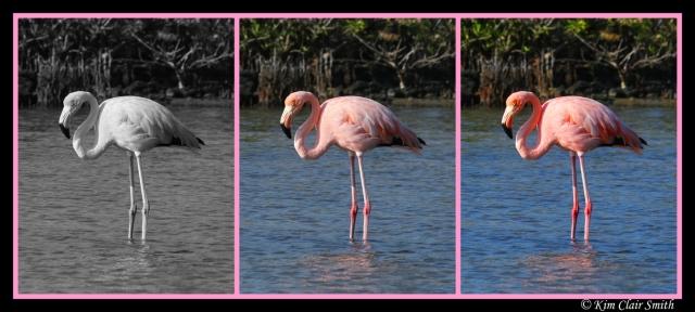 Flamingo Collage w sig