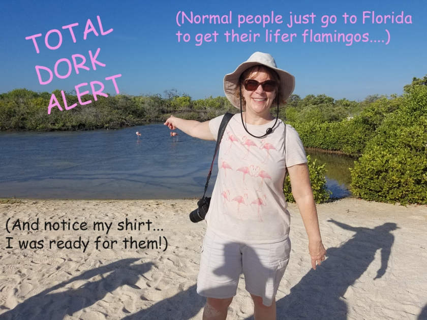 Kim's lifer flamingos in the Galapagos - Dork Alert