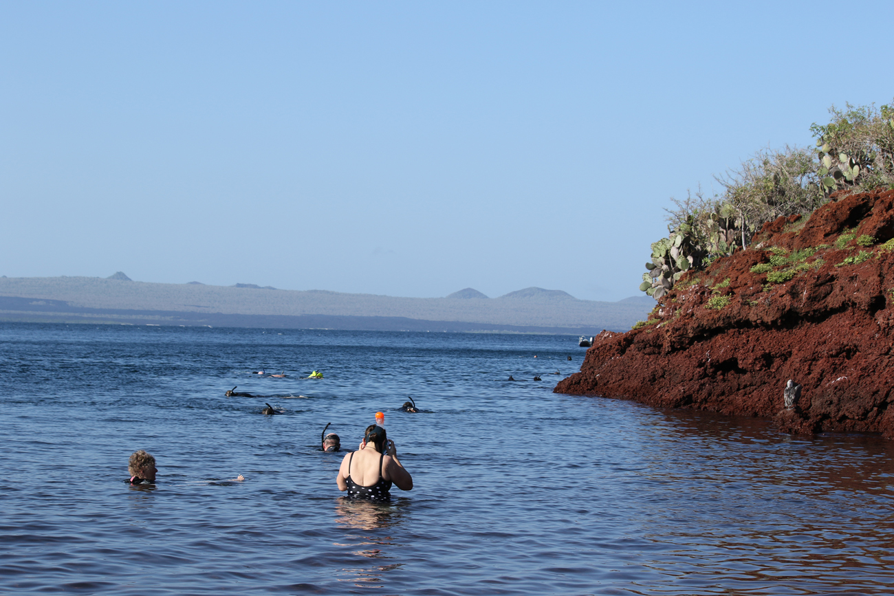 Snorkelers off Rabida island