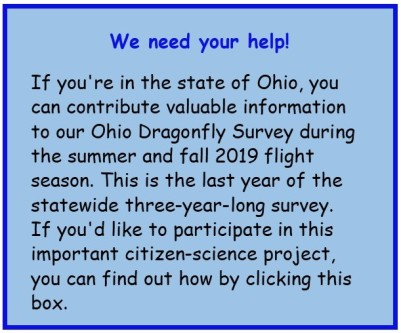 Blog graphic for ohio dragonfly survey 2019