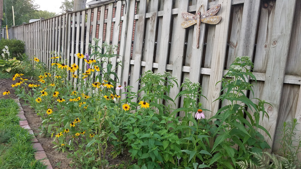 My first year native bed July 16 2018 - blog