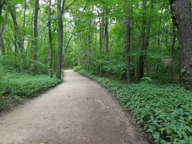 Red trail at Wildwood - lush and green in mid-August