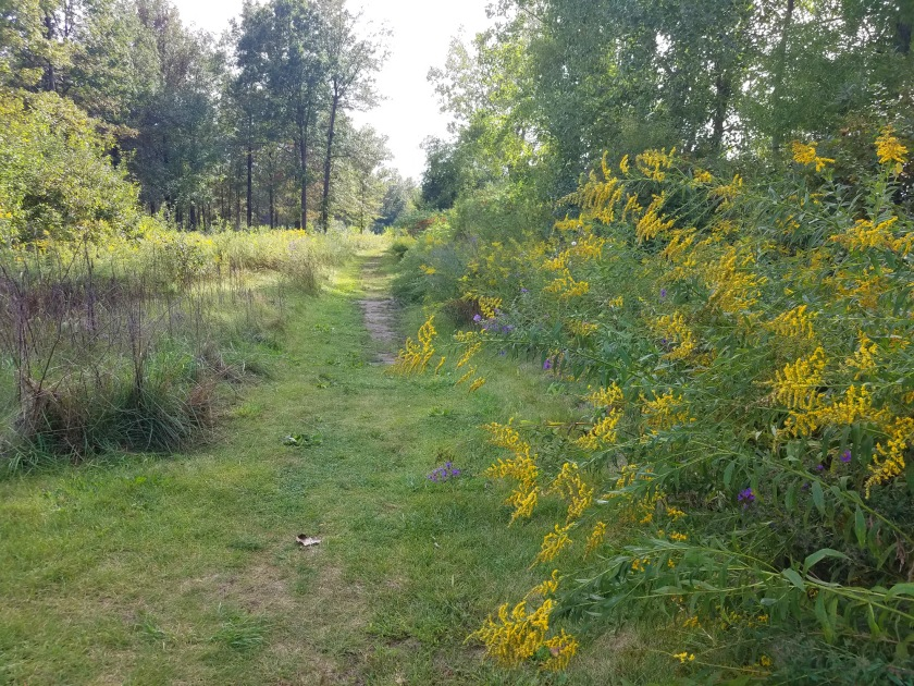 Path around Wiregrass Lake with goldenrod