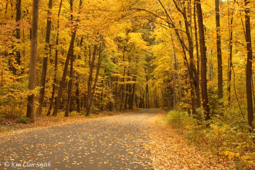 Fall foliage at Secor - Kim Clair Smith
