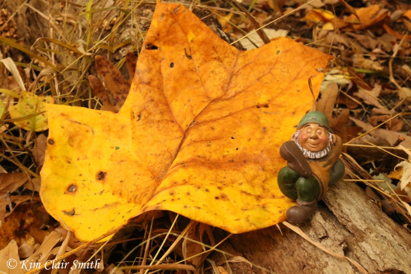 Fall foliage with gnome - Kim Clair Smith