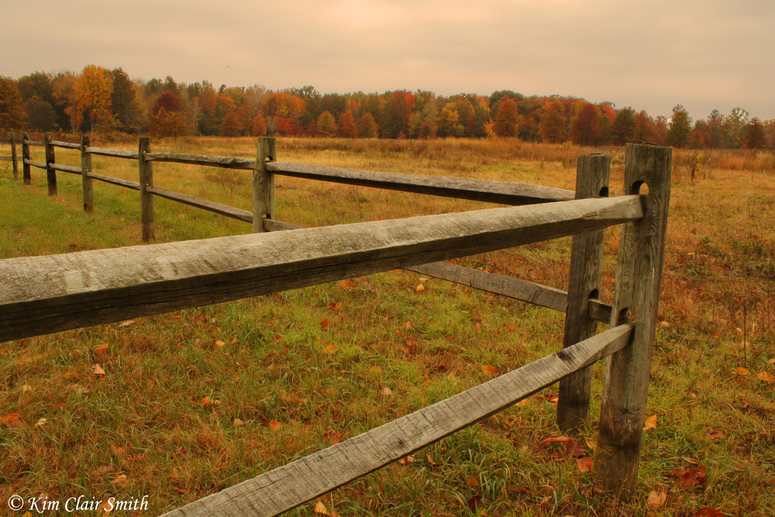 Fence and fall foliage