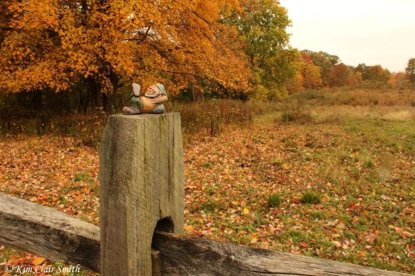 Gnome on fence - Kim Clair Smith