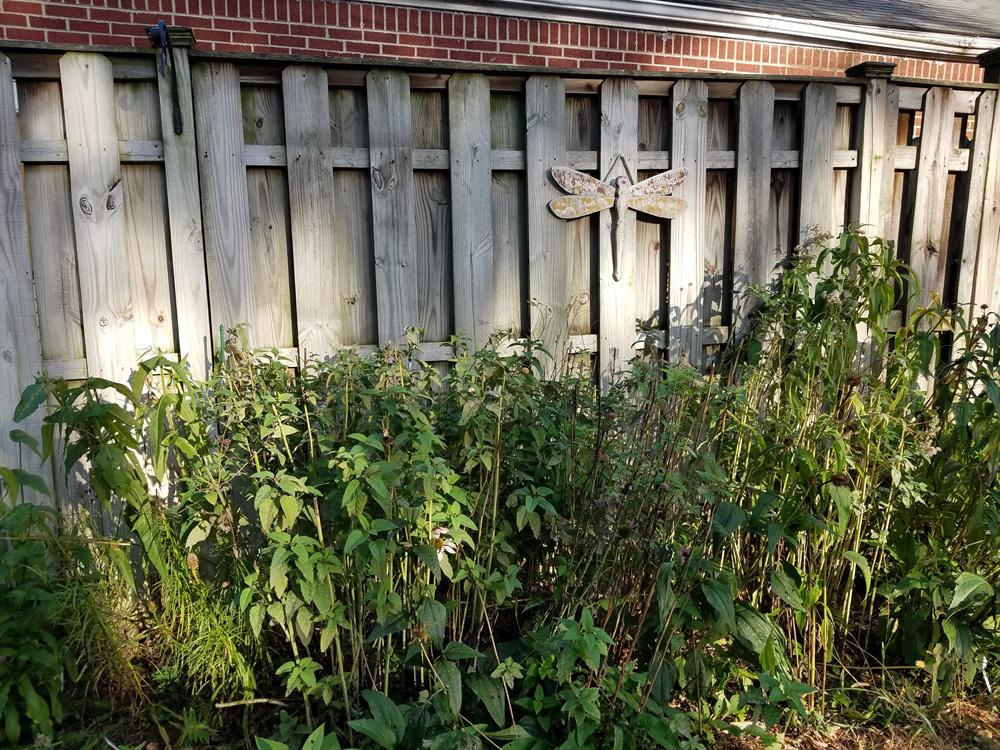 Hollow stems of monarda left for winter (2)