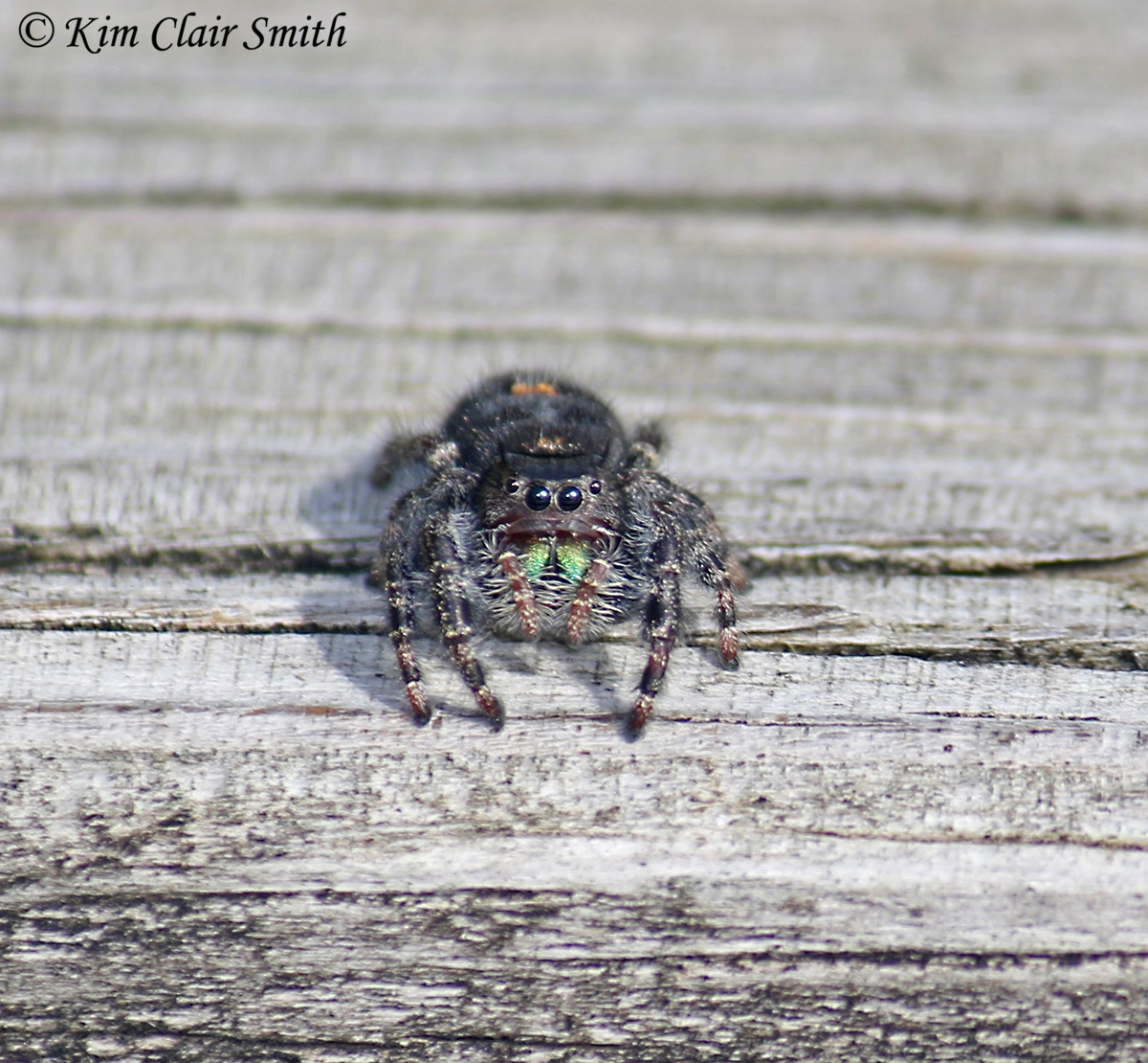 Bold jumper - spider - cute face view w sig
