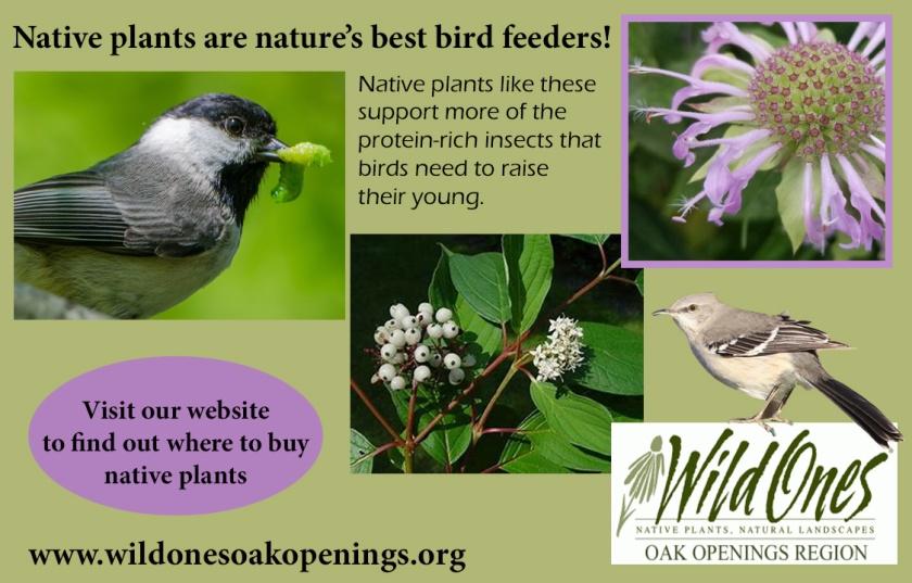 Wild Ones - native plants are bird feeders