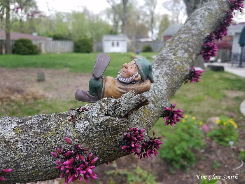 Gnome on redbud branch w sig