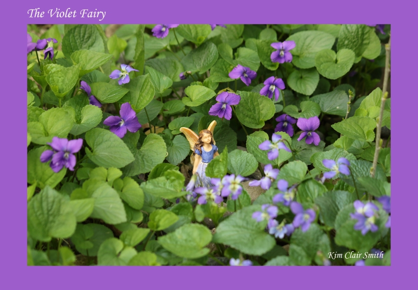 The Violet Fairy w sig