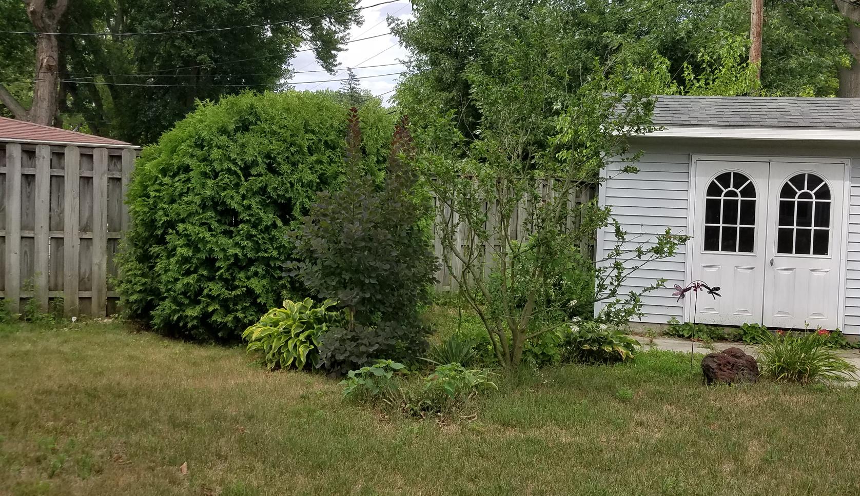 Before shrub removal 7-16-20